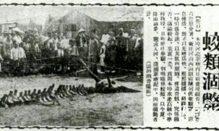 1934年辽宁营口坠龙事件,真实报道过的龙骨迷踪