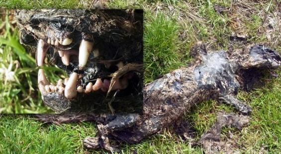 2012年时,有民众于当地发现不明动物遗骸,外观与传说中的野兽相似。