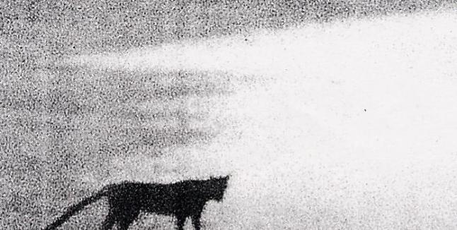 """英国康沃尔郡东北部的""""博德明野兽""""Beast of Bodmin揭开真相?"""