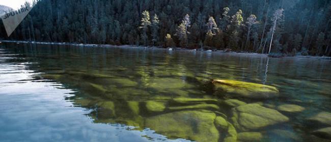 俄罗斯联邦渔业署:希望在5年内恢复贝加尔湖秋白鲑种群