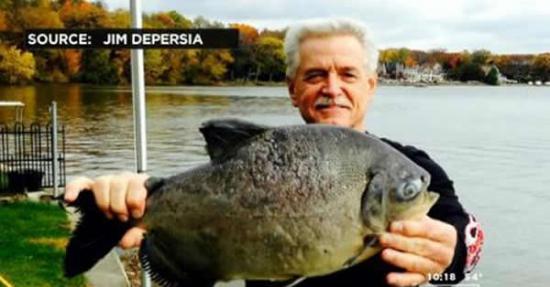 美国一渔夫捕到6斤重专咬男性生殖器食人鱼