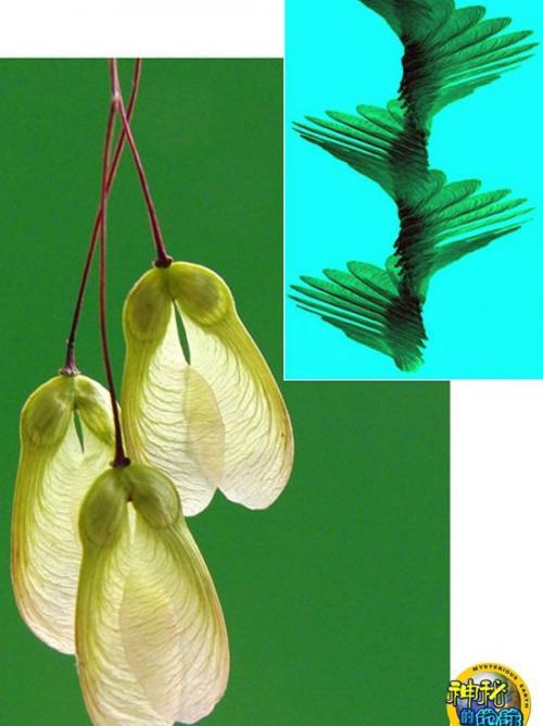 种子有双隐形的翅膀
