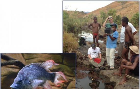 马达加斯加重新发现了丽鱼科曼加拉哈拉慈鲷