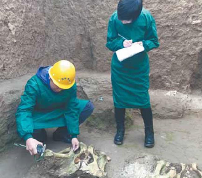 多学科融合模式推进了中国动物考古学又快又好地向前发展