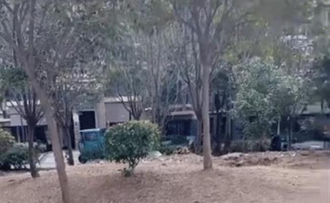 江苏省宿迁市泗洪县南山龙郡社区女子上吊自杀后树木流出红色液体 居民放鞭炮辟邪