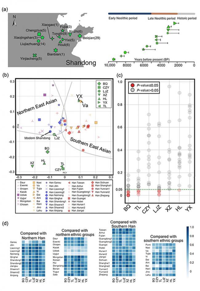 距今9500-1800年前的山东地区先民线粒体全基因组研究成果