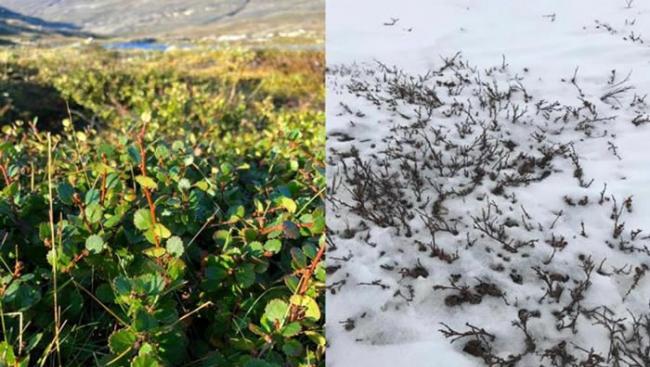 古老DNA显示北极或曾郁郁葱葱 有可能再次重现