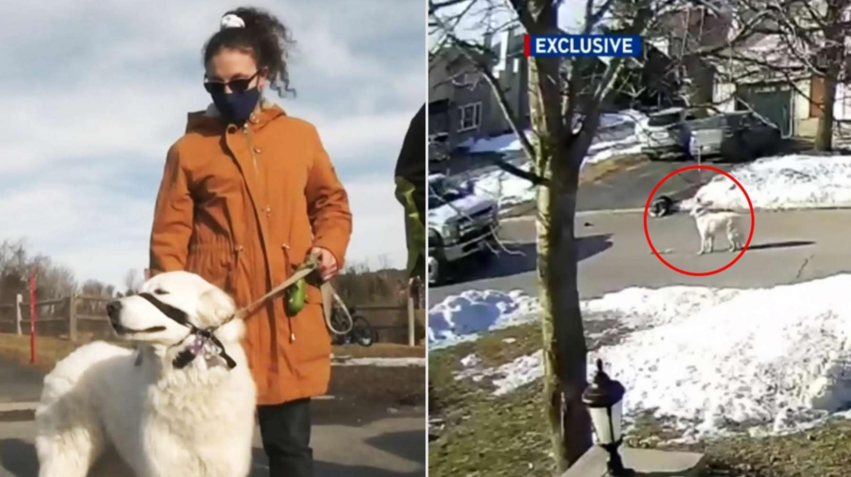 加拿大女子遛狗时突然倒地失去意识 忠犬立即跑到街上拦车成功救命