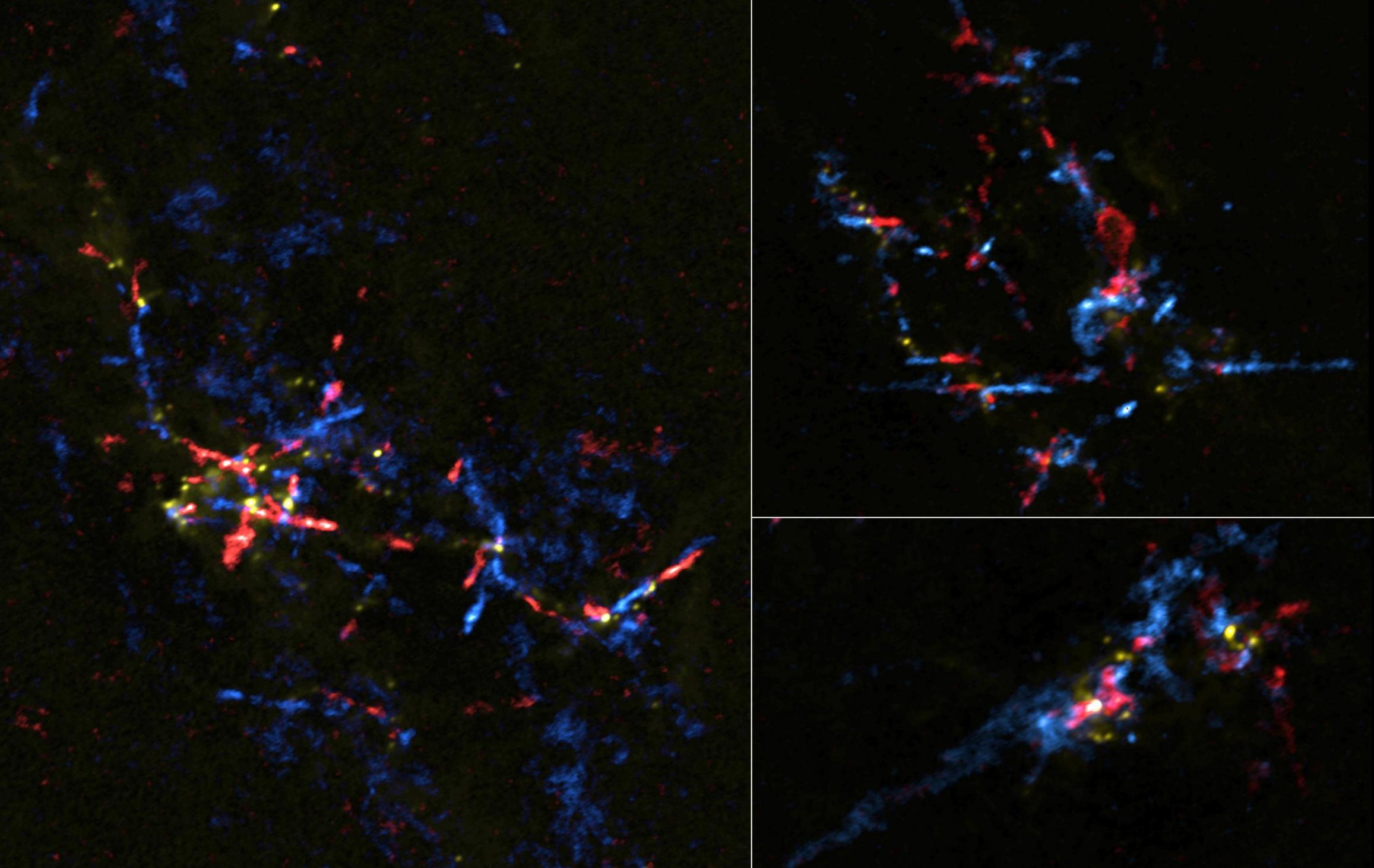 """阿塔卡马大毫米/亚毫米波阵列ALMA在银河系中心发现许多包含婴儿恒星的""""恒星蛋"""""""