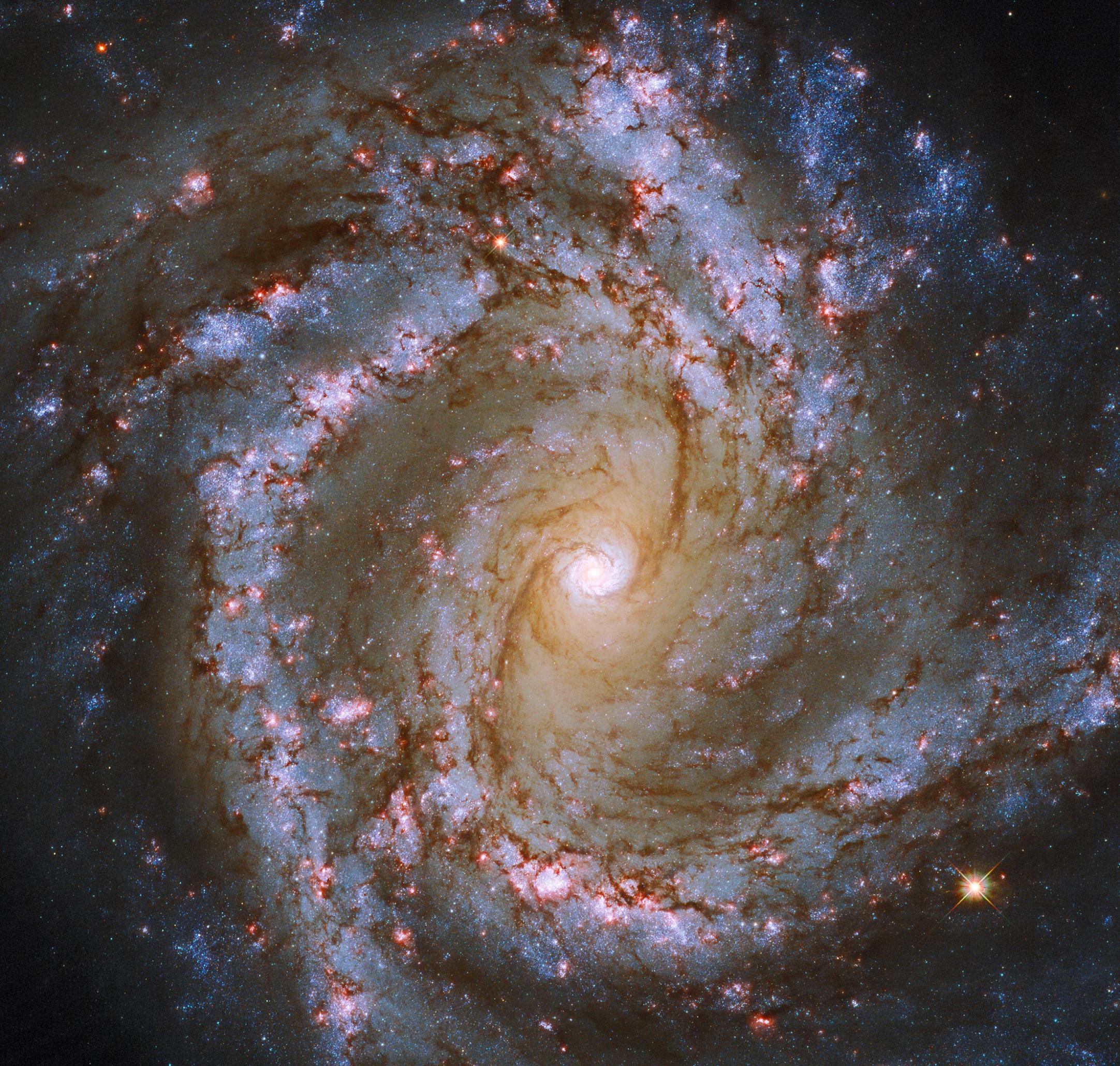 """哈勃望远镜在M61星系发现壮观的带有黑暗触须的""""发光心脏 """""""