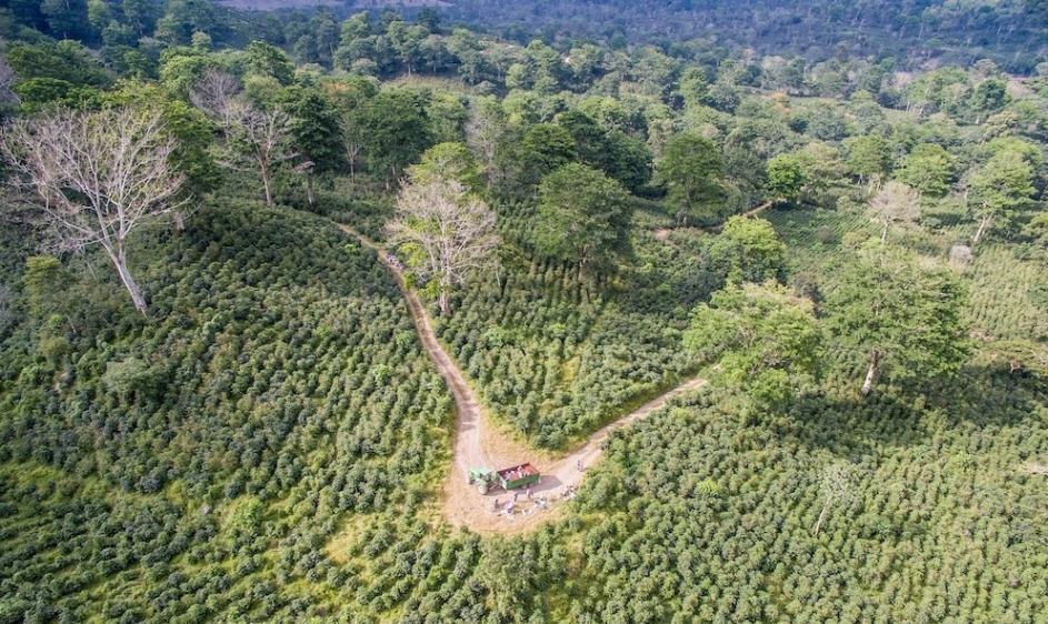 咖啡制造过程所剩下的残余物能让被破坏的森林起死回生