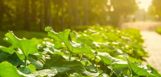 地球上植物赖以生存的光合作用在距今12.5亿年前开始出现