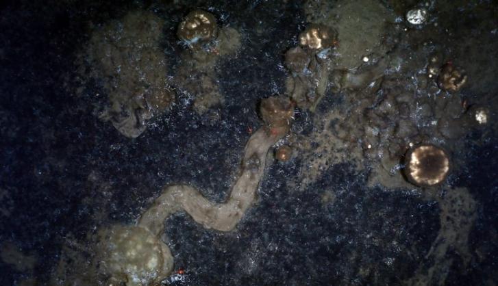 《当代生物学》杂志:神秘的海底痕迹显示北极海绵在移动 并非完全固着