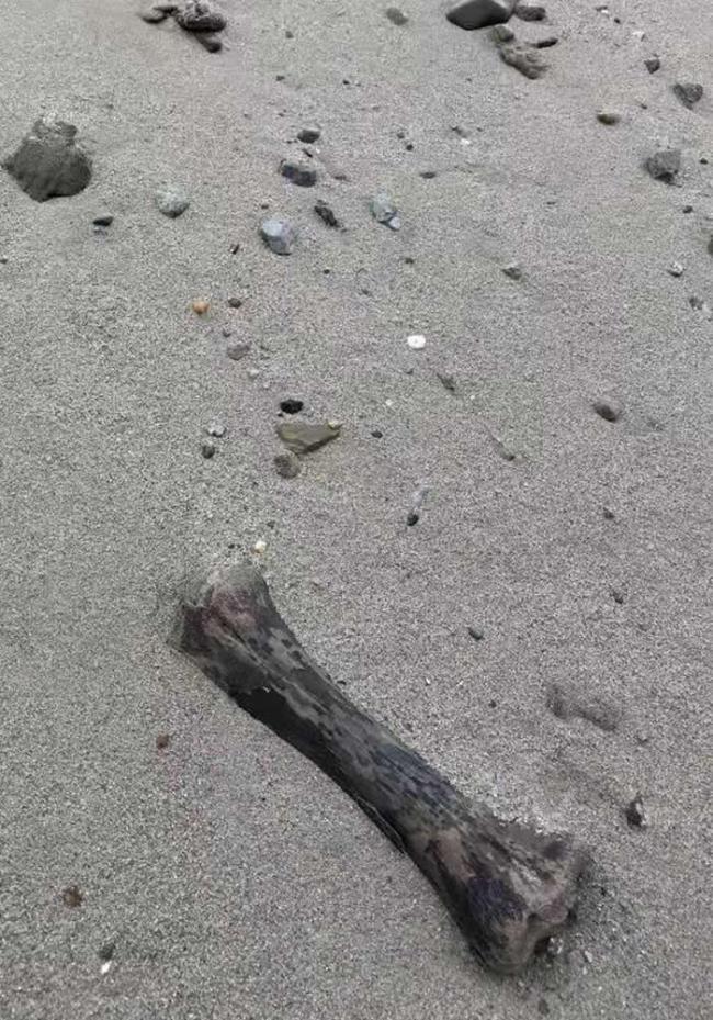 哈尔滨松花江边的哺乳动物化石