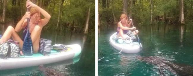 美国佛罗里达州女子在河里划船遇到巨大鳄鱼靠近